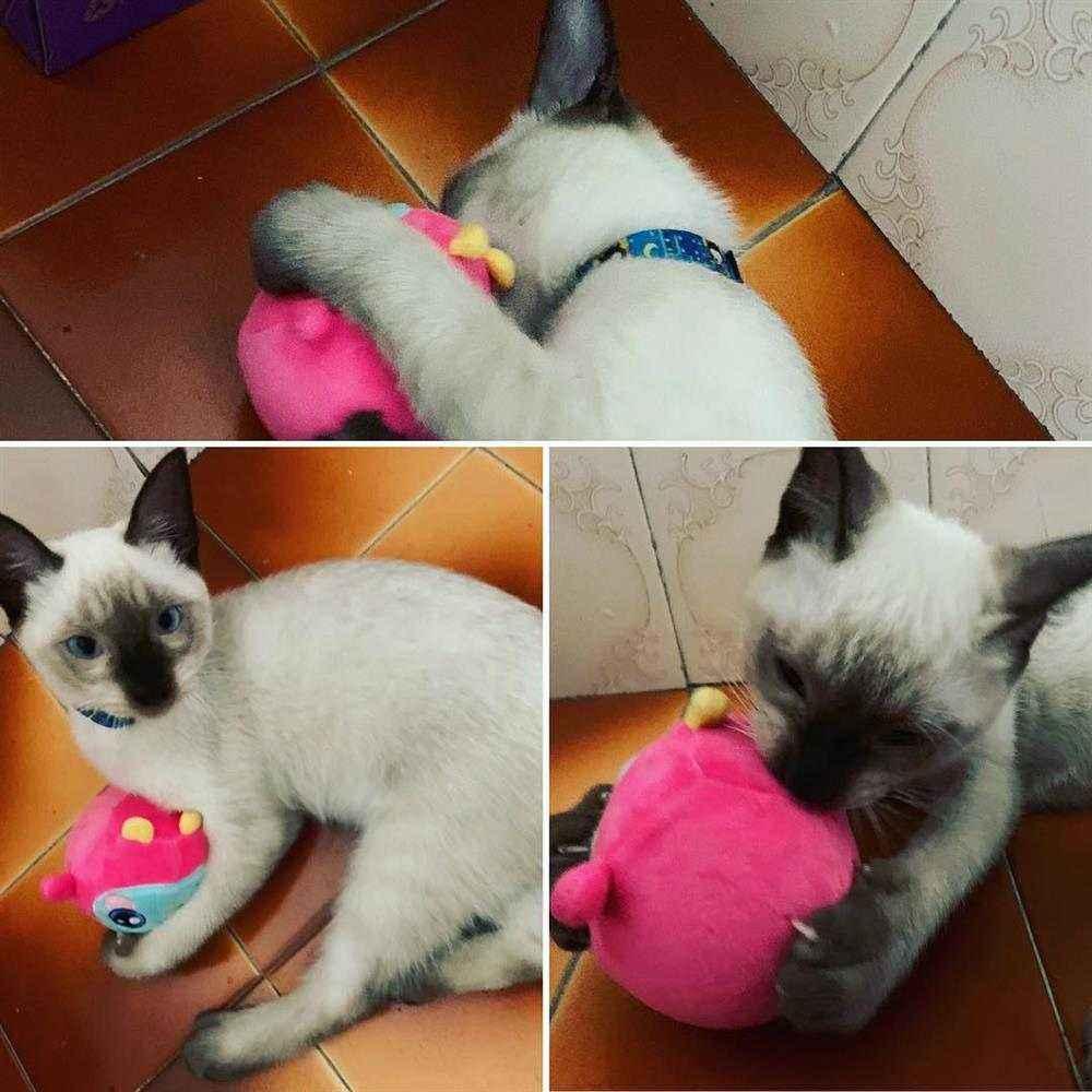 brinque de gato