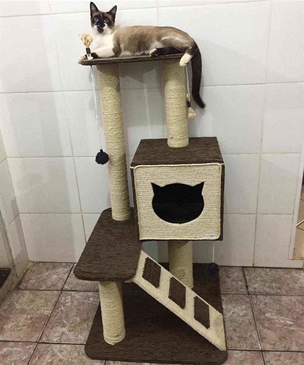 move para gato