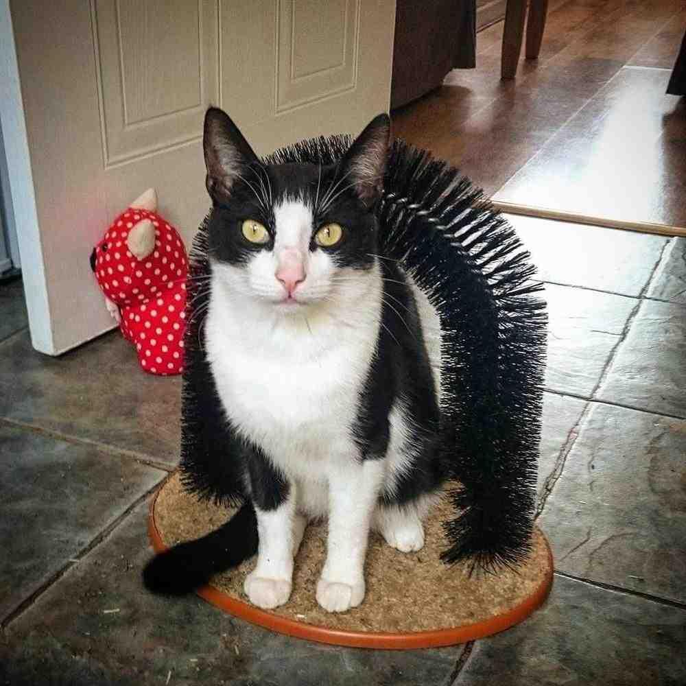 coçado para gatos