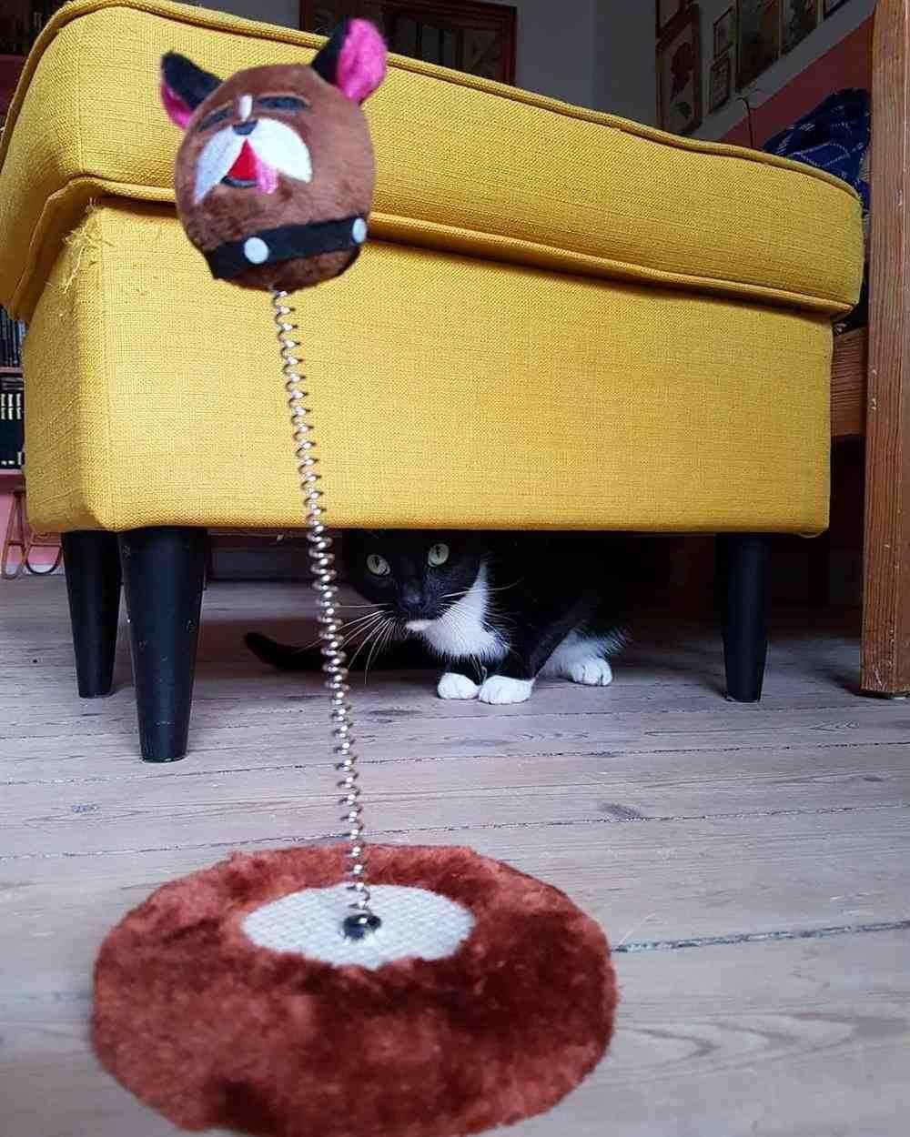 brinquedo que se mexe para gatos