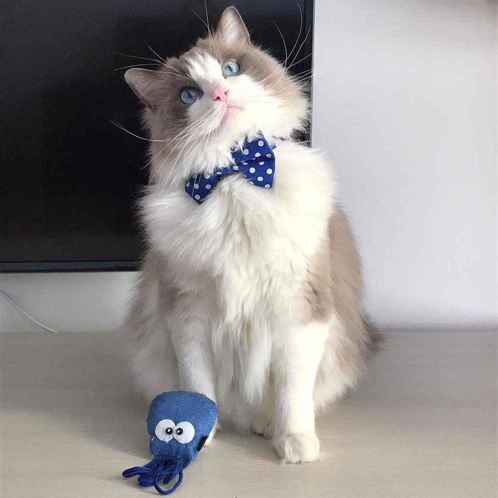 brinquedo de lã para gatos