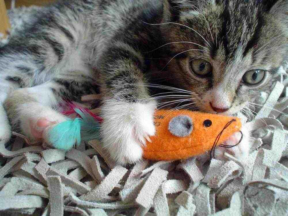 brinquedo de isca para gatos