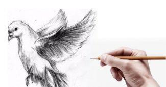 dicas para desenhar melhor com lápis