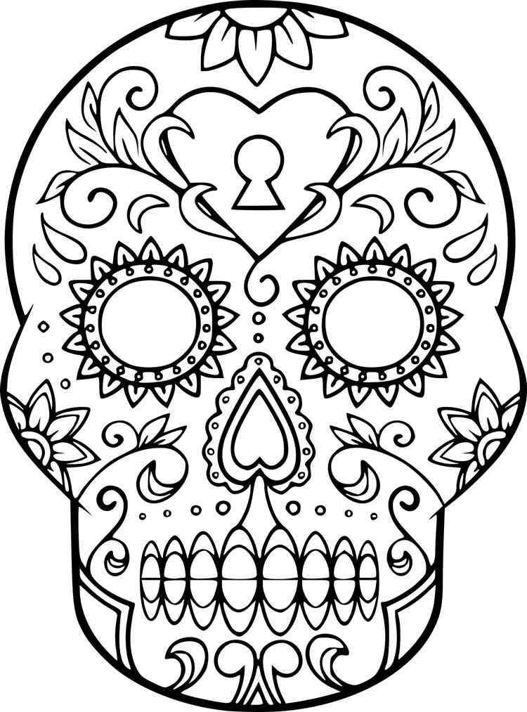 desenho de cranio