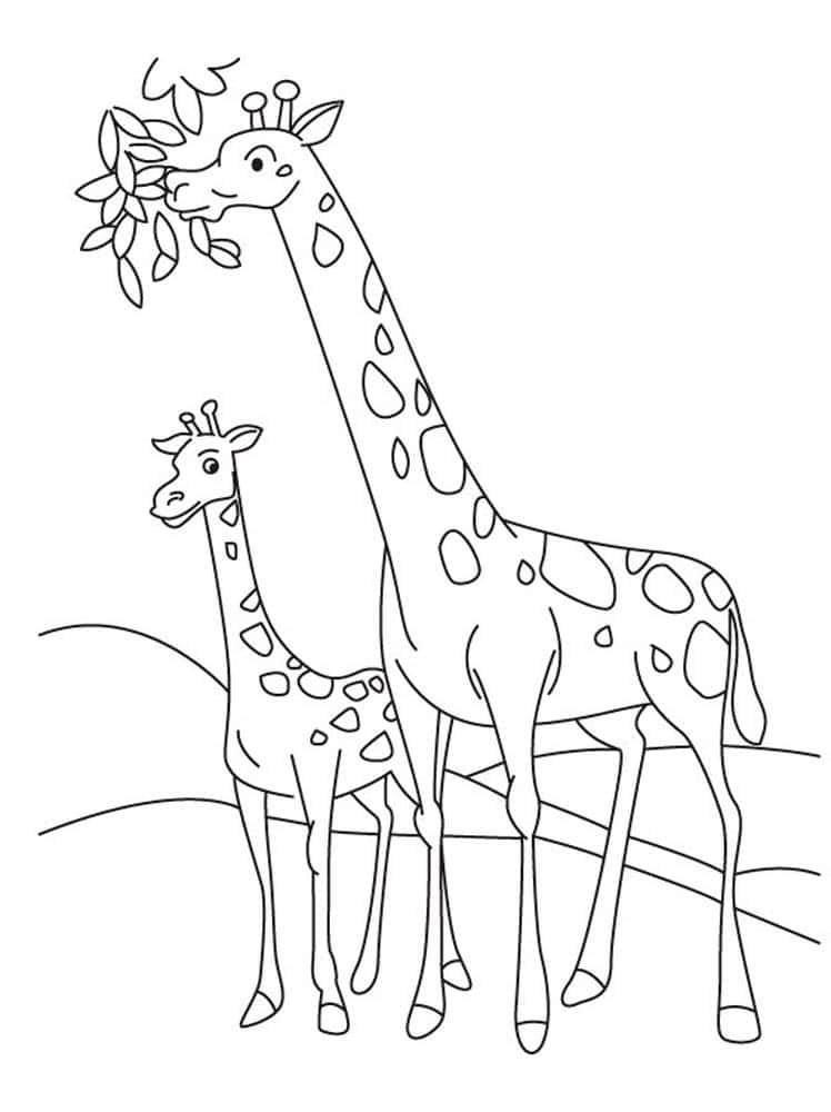 desenho para desenhar