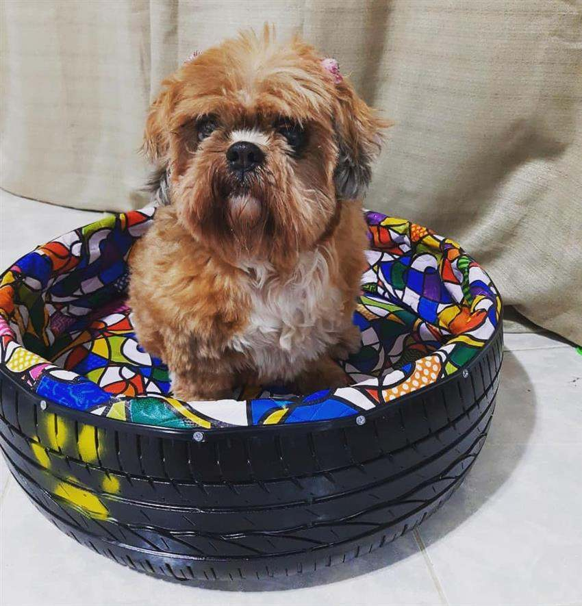 Puff de pneu para cachorro