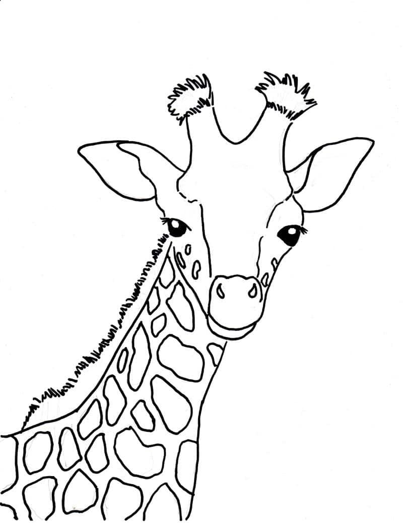desenho de girafa grande