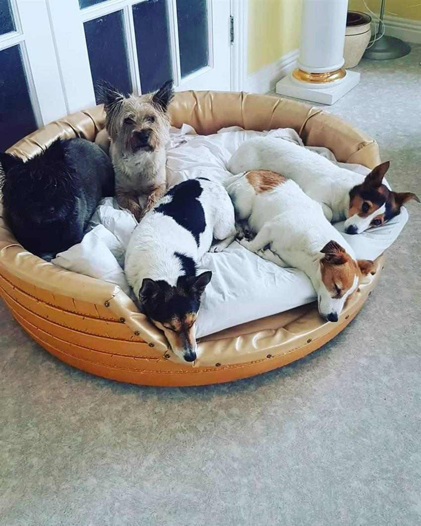 puff estilo cama para pet