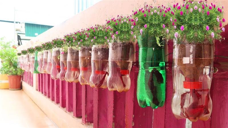 decoração na parede com plantas