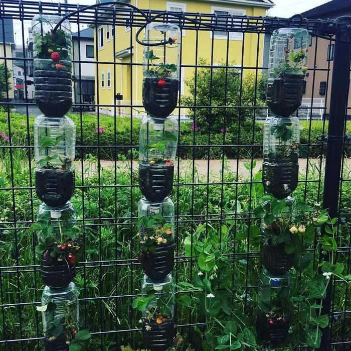 horta domestica