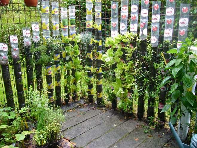 horta no quintal