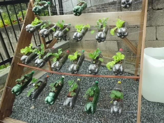 tipos de horta