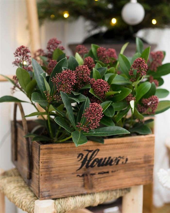 cachepot de madeira com flores