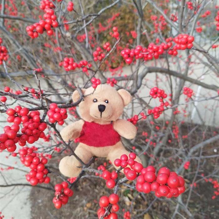 decoração de natal no jardim