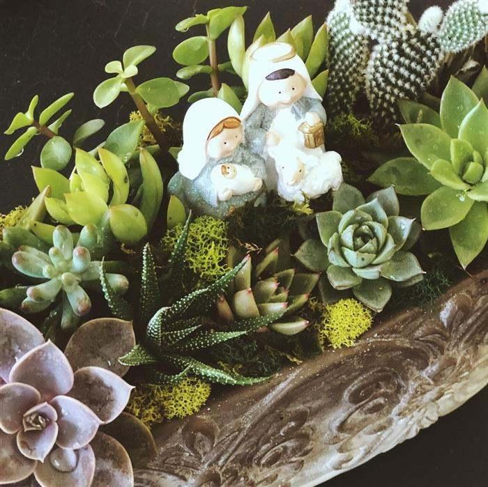 suculentas decoradas para natal