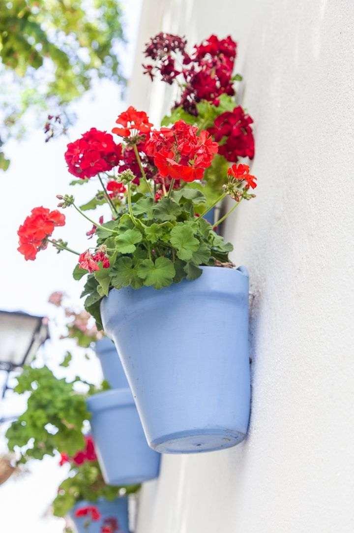 Vasos para jardim vertical meia lua