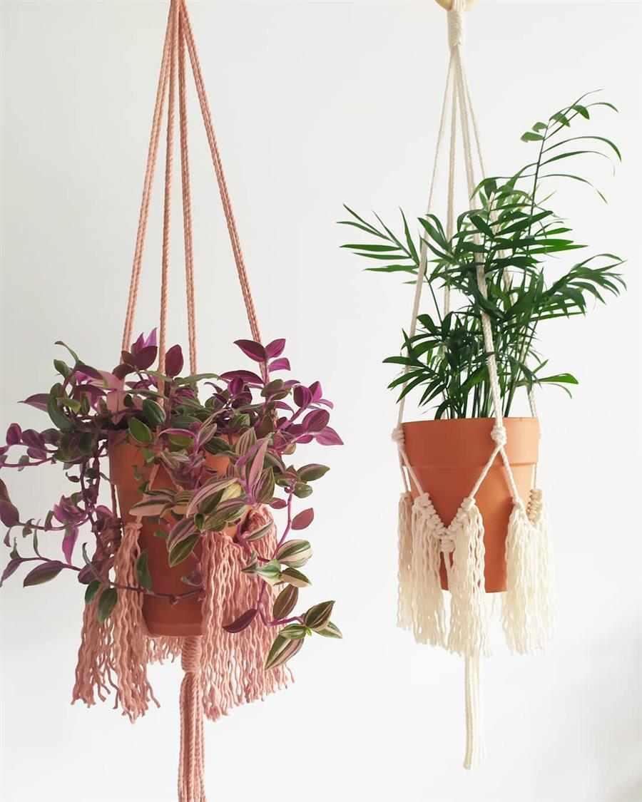 pendurar plantas na parede