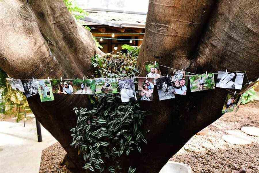 Árvore decorada com fotografias