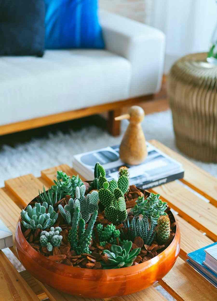 Mini jardim de cactos e suculentas