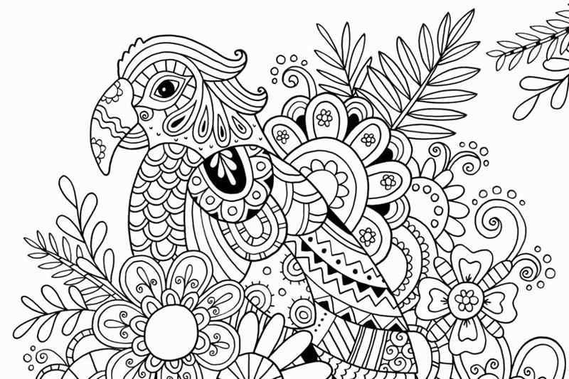 imagem de papagaio