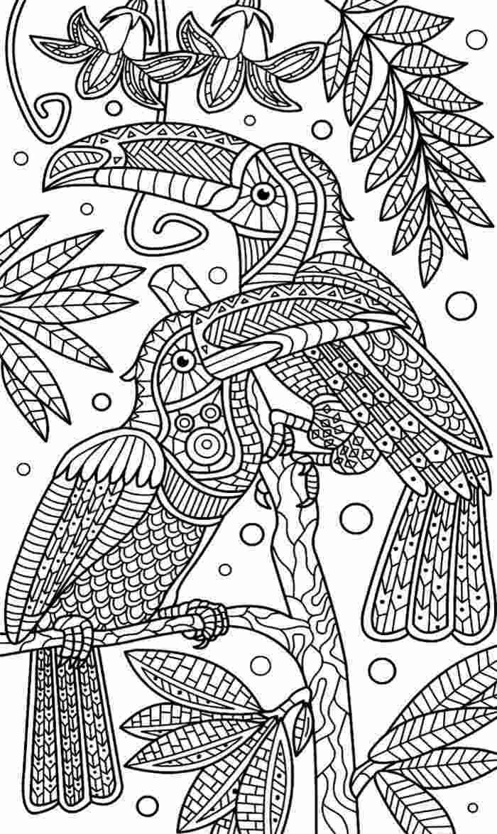 desenho de tucano para adulto colorir