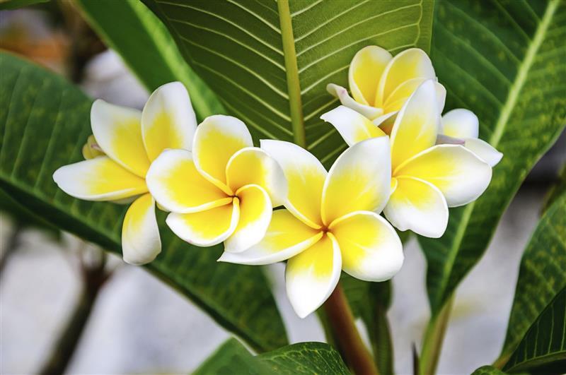 flores mais belas do mundo