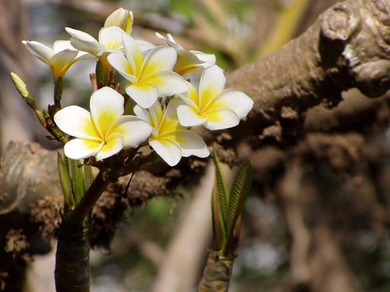 nome das flores mais lindas do mundo