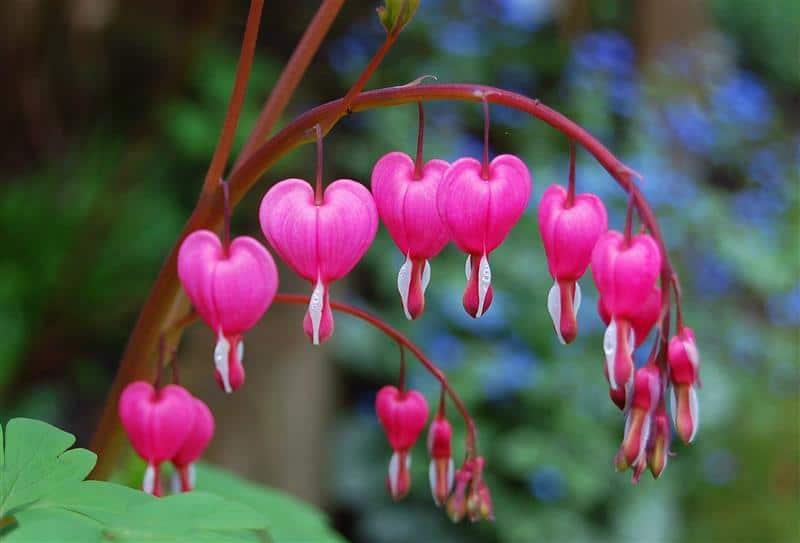 lista das flores mais lindas do mundo
