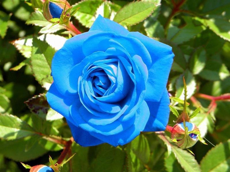 flores mais lindas do mundo fotos