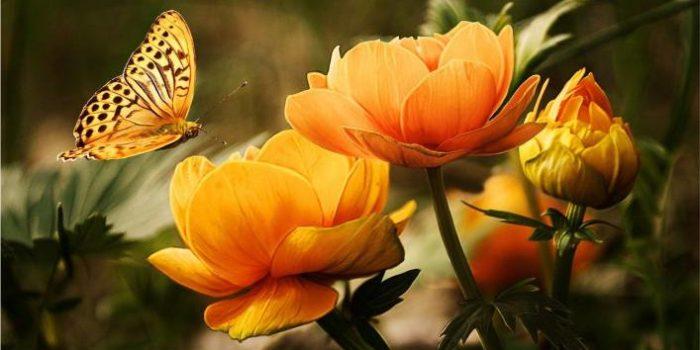 flores mais bonitas do mundo