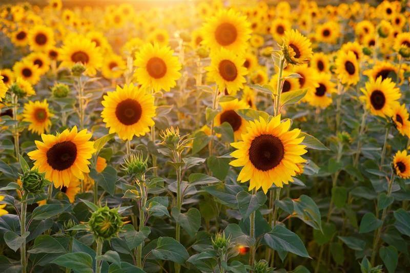 flores mais lindas do mundo e seus nomes