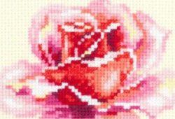 rosa basica ponto cruz