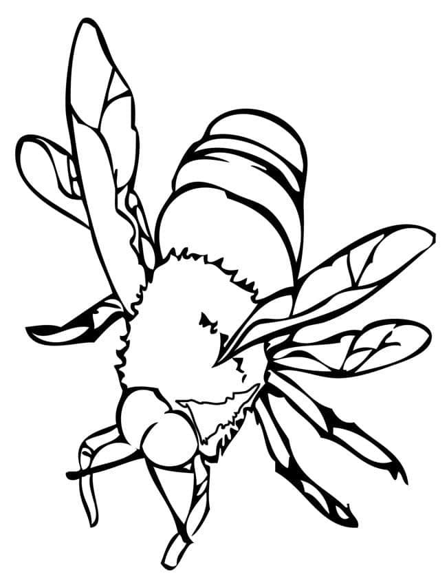 figura de abelha