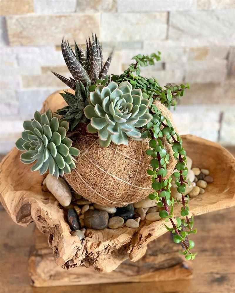melhores plantas para kokedama