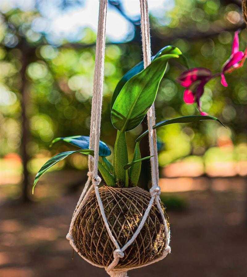 kokedama de orquídea