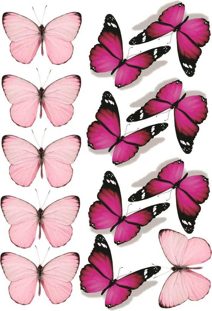 borboletas rosa e lilas